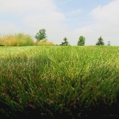 Image d'un gazon bien vert vue au ras du sol.