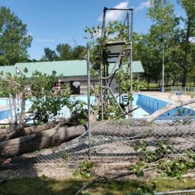 Des branches d'arbres sur une clôture de piscine brisée.