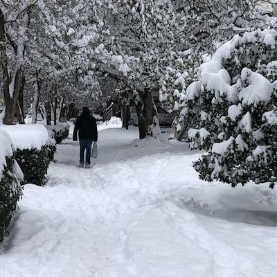 Un piéton marche le long d'un trottoir enneigé entouré d'arbres à North Vancouver le 15 janvier 2020.