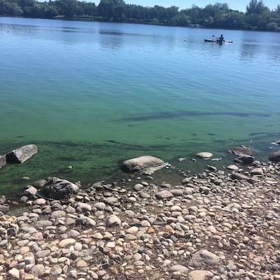 Des algues bleu-vert sur le bord du lac