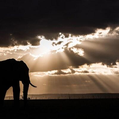Un éléphant marche sur une vaste plaine avec des nuages se profilant à l'horizon.