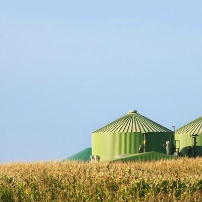 Une usine de biométhanisation se dresse dans un champ de maïs.