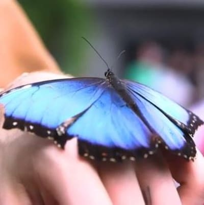 Un papillon bleu s'est déposé sur la main d'un participant.