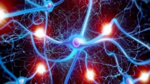 Image représentant les neurones qui sont comme les différentes pièces du puzzle que représente le cerveau.