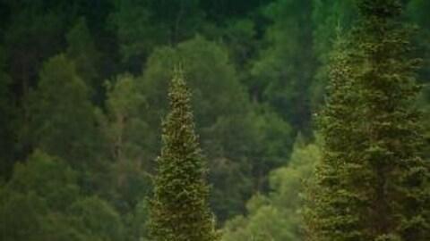 Des arbres vus de haut dans la forêt Montmorency