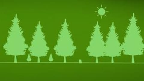 Une illustration de sapins