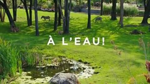 Capsule vie de zoo sur l'eau