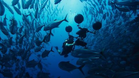 Plongeur sous-marin entouré de poissons.
