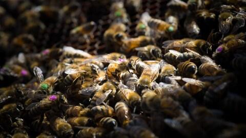 Des abeilles dans une ruche.