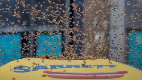 Des centaines d'abeilles sont posées et volent autour d'un parasol.
