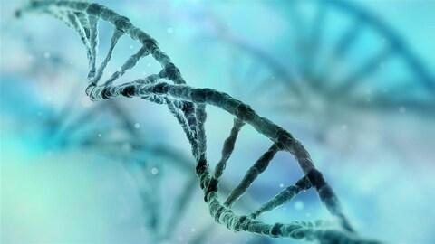 Une représentation de l'ADN