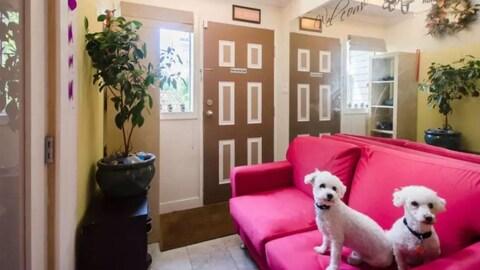 Deux petits chiens blancs frisés sont sur un canapé fuchsia dans un logement ensoleillé.