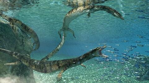 Des lézards dans l'eau en train de manger des petits poissons.