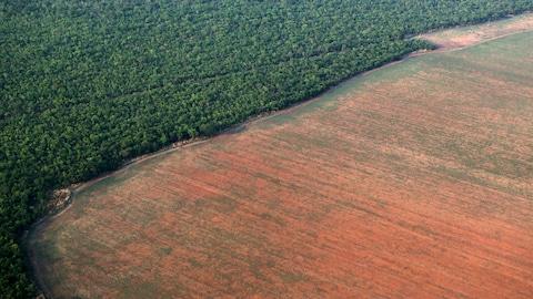 La forêt amazonienne bordée par des terres déboisées préparées pour la plantation de soja