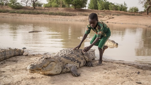 A boy leans on the back of a crocodile on May 19, 2018 at a pond in Bazoule in Burkina Faso, a village which happily shares its local pond with 'sacred' crocodiles. - Crocodiles may be one of the deadliest hunters in the animal kingdom, but in a small village in Burkina Faso it is not unusual to see someone sitting atop one of the fearsome reptiles. According to local legend, the startling relationship with the predators dates back to at least the 15th century. The village was in the grip of an