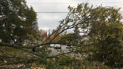 Cet arbre s'est affaissé sur l'avenue de Puiseaux, dans le secteur de Sainte-Foy.