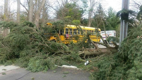 Des arbres tombés à Mississauga sur un autobus scolaire