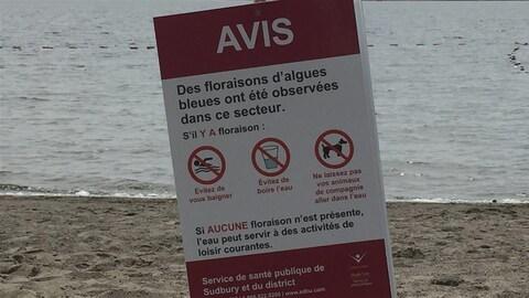 Des avis de floraison d'algues bleu-vert sont installés sur cinq plages du lac Ramsey, dans le Grand Sudbury.