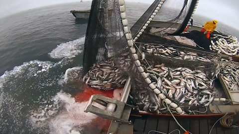 Un bateau de pêche en action