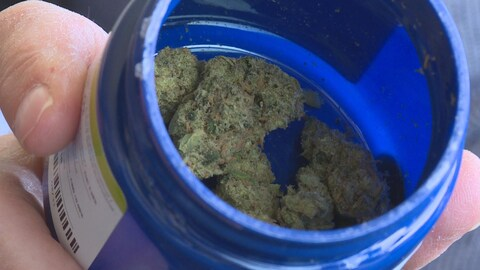Un pot de cannabis presque vide.