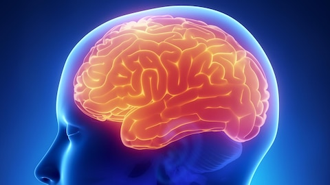 Entrevue avec Naguib Mechawar:La banque de cerveau