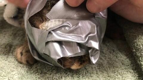 Un chat avec du ruban adhésif autour du visage.