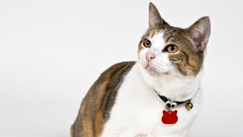 Un chat qui porte une médaille