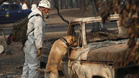 Un  membre des équipes de sauvetage et son chien  cherchent des restes humains dans les carcasses brûlées.