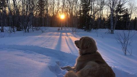 Un chien couché dans la neige au coucher du soleil.