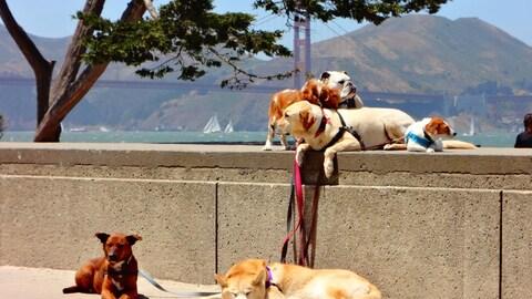 Six chiens sont couchés le long du parapet face à la mer. Ils ont des laisses autour du cou et attendent le préposé pour leur promenade.
