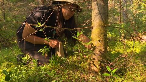 Une femme autochtone cueille des champignons dans une forêt.