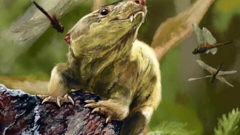 De cervelles de reptiles à cervelles de mammifères