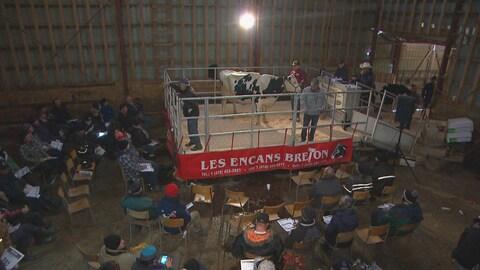 Une vache est mise à l'encan et plusieurs personnes sont assises autour de l'enclos pour l'observer.