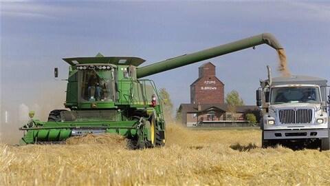 Une moissonneuse-batteuse déverse du grain dans la benne d'un camion dans un champ de céréales.