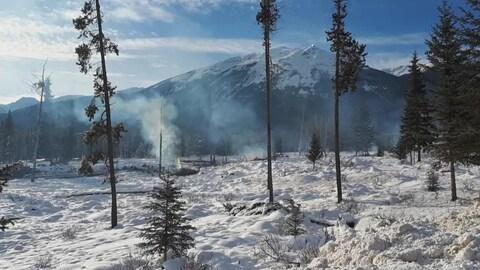 Quelques arbres dégarnis se dressent debout entre des tas de tourbe fumante, entourés de neige.