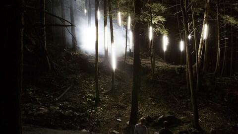 Foresta Lumina : des arbres lumineux et de la brume, dans la forêt.