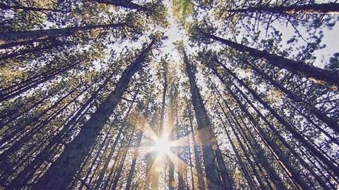 Des arbres vus en contre-plongée.