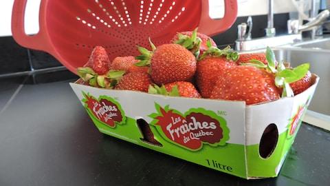 Des fraises du Québec dans un panier sur un comptoir.