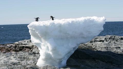 Des pingouins se tiennent sur un bloc de glace fondant lentement, en Antarctique.