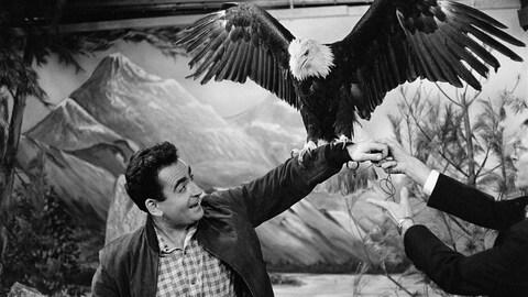 Dans un studio de télévision, l'animateur Guy Provos offrant son bras en guise de perchoir à un pigargue (aigle à tête blanche).