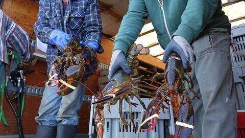 Deux pêcheurs montrent des homards