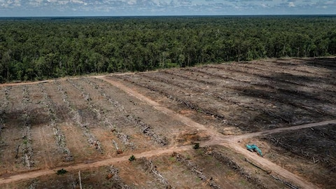 Vue aérienne de la déforestation d'une plantation de palmiers utilisés à la production d'huile de palme.