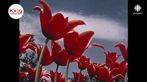 Fleurs dont les pétales sont ouverts