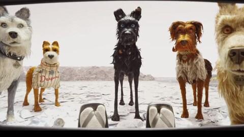 Cinq chiens fixent du regard un aviateur.