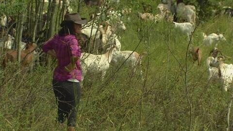 Jeannette Hall, propriétaire de chèvres et bergère, surveille son troupeau au parc Rundle.