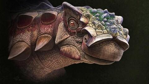 Représentation artistique de la tête d'un Akainacephalus johnsoni.