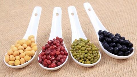 Quatre variétés de légumineuses présentées dans des cuillères blanches.