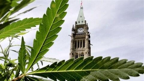 Le gouvernement canadien entend légaliser l'usage de la marijuana à usage récréatif d'ici juillet 2018.