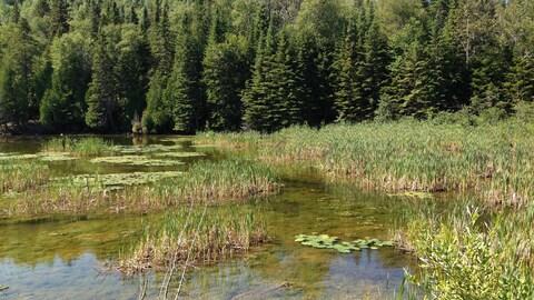 Un étang.