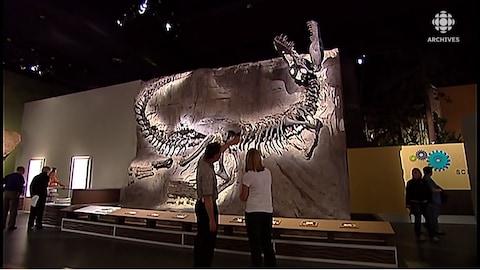 Deux visiteurs regardent un squelette de tyrannosaure au musée Tyrrell.